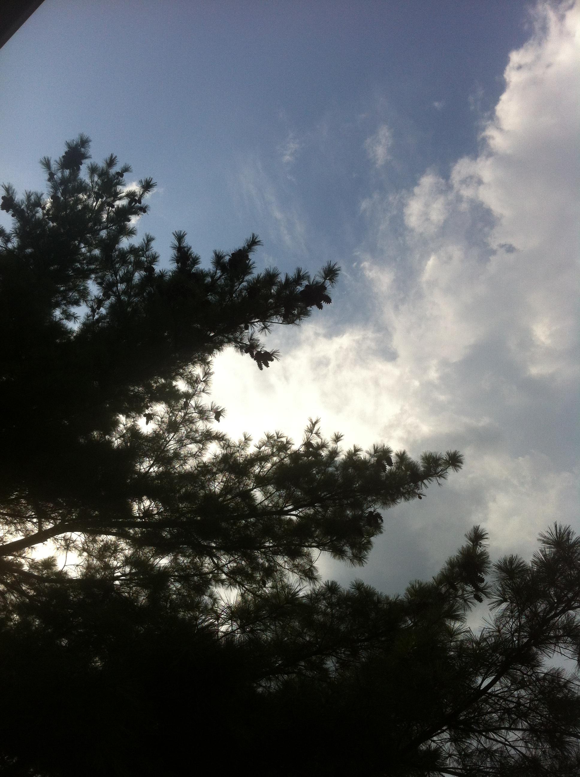 pine tree and sunshine